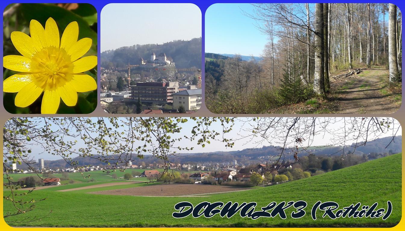 DOGWALK 3 (Rothöhe)