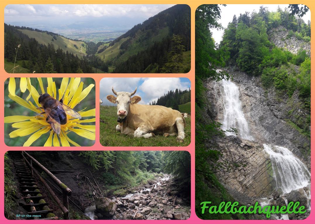 Fallbachquelle