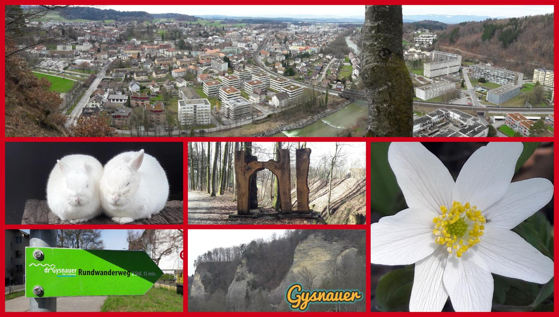 Gysnauer