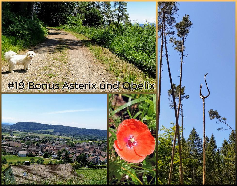 19-Bonus-Asterix-und-Obelix