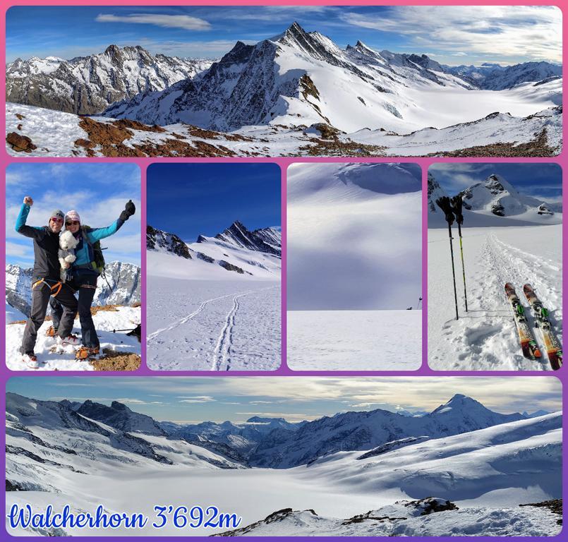 Walcherhorn-3'692m