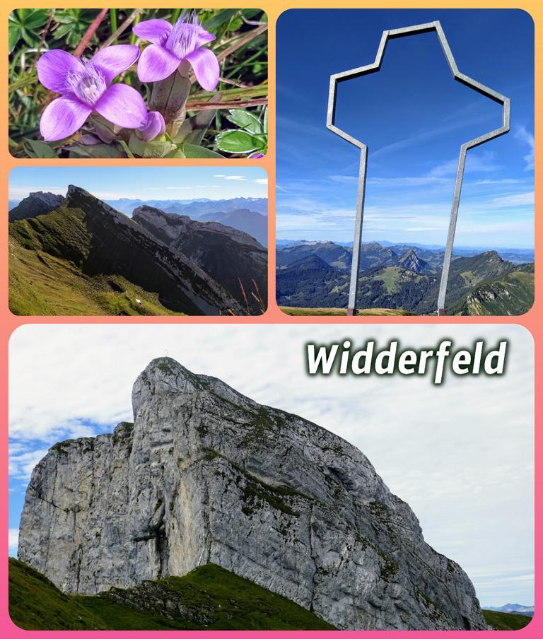 Widderfeld