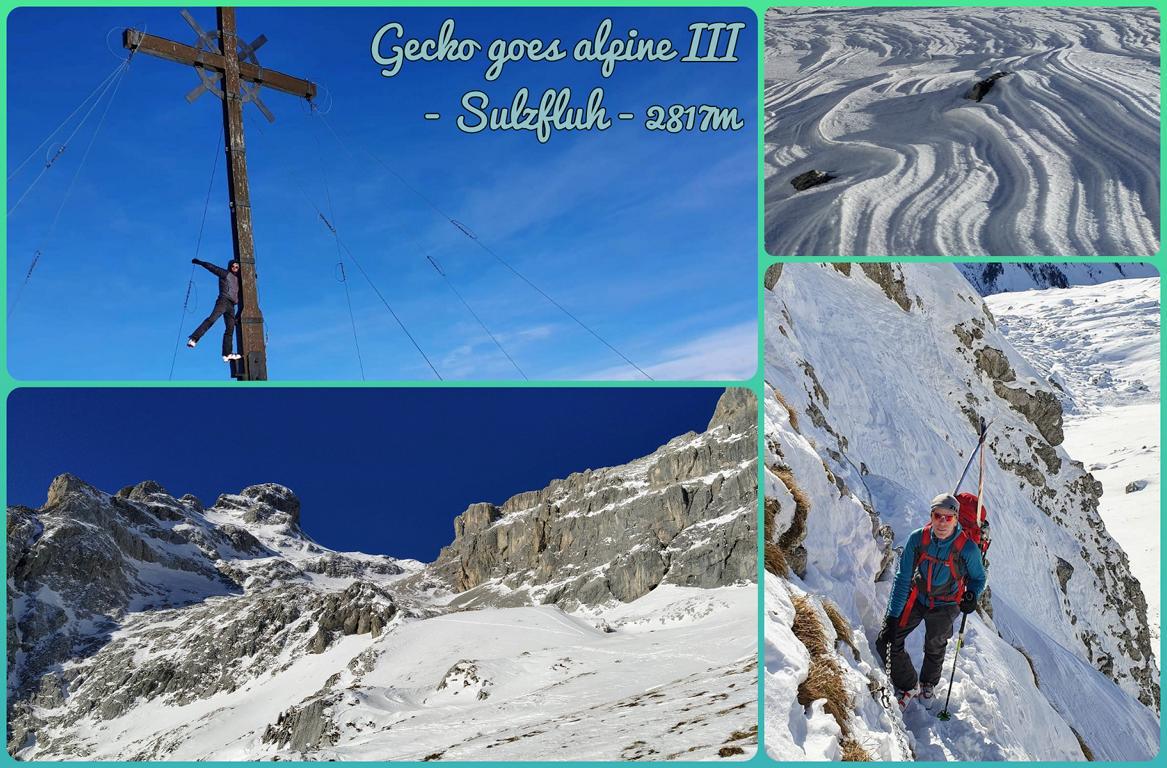 Gecko-goes-alpine-III-Sulzfluh-2817m