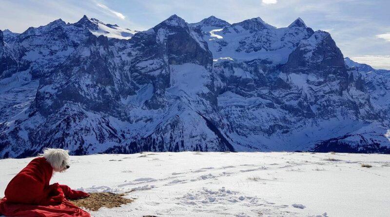 Grindelgrat